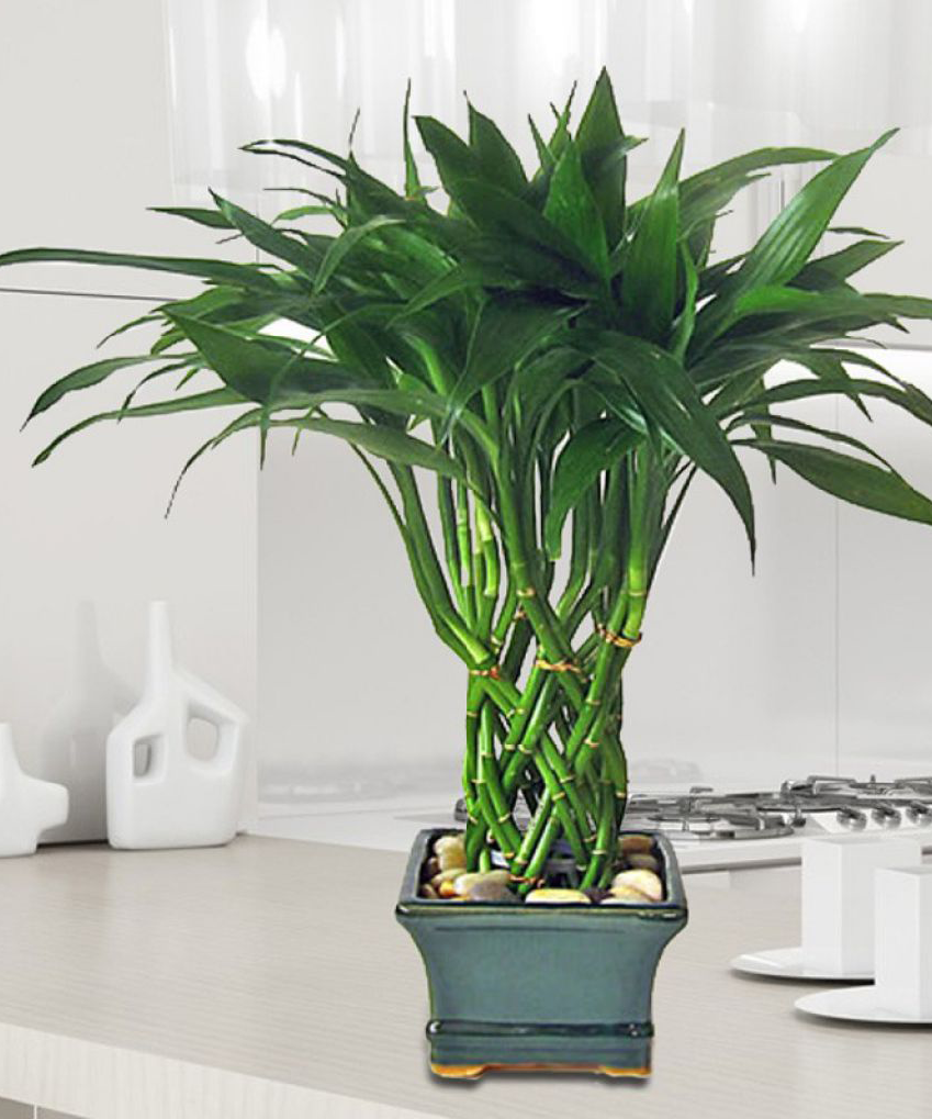 quelle plante pour quelle pi ce de votre int rieur. Black Bedroom Furniture Sets. Home Design Ideas