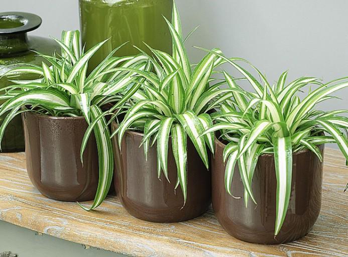 Quelle Plante Pour Quelle Piece De Votre Interieur