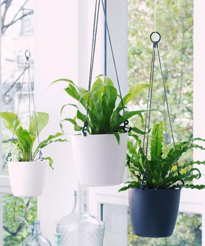 Plante Pour Salle De Bain Sombre quelle plante pour quelle pièce de votre intérieur ?