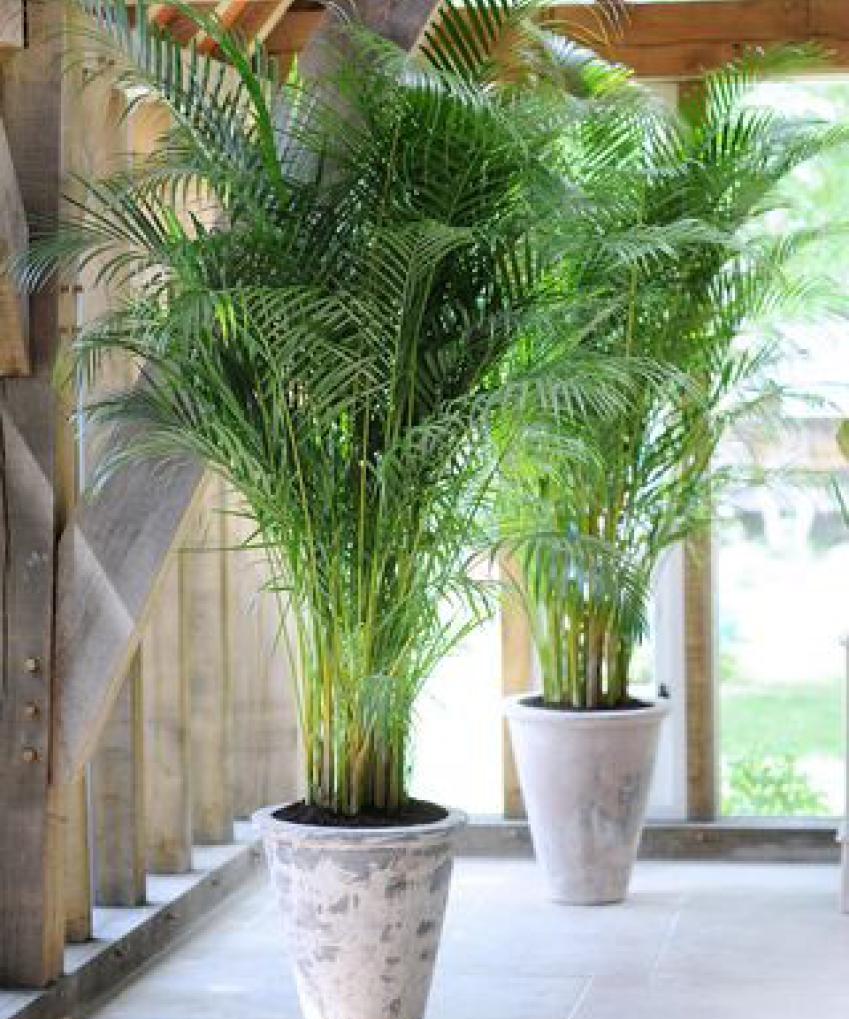 Plante D Intérieur Qui Aime La Chaleur quelle plante pour quelle pièce de votre intérieur ?