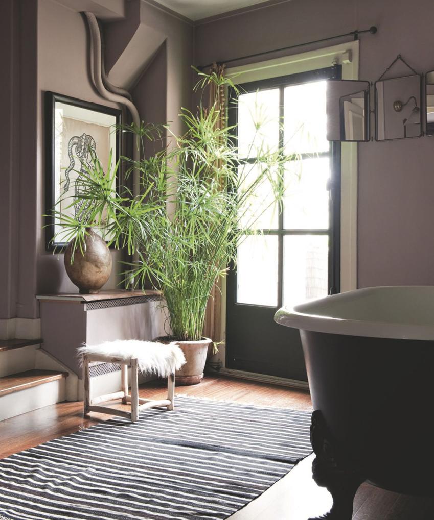 Quelle plante pour quelle pièce de votre intérieur ?