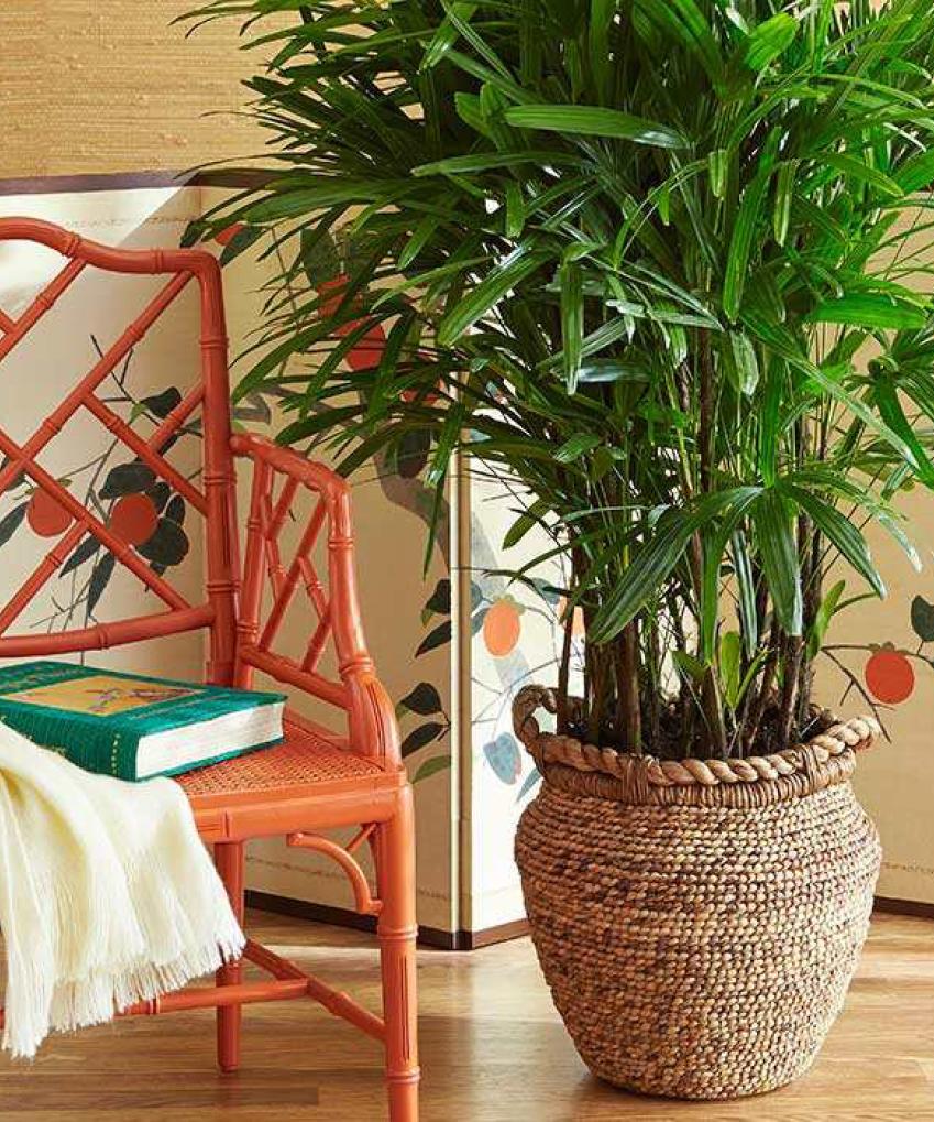 Suspension Pour Plantes D Intérieur quelle plante pour quelle pièce de votre intérieur ?