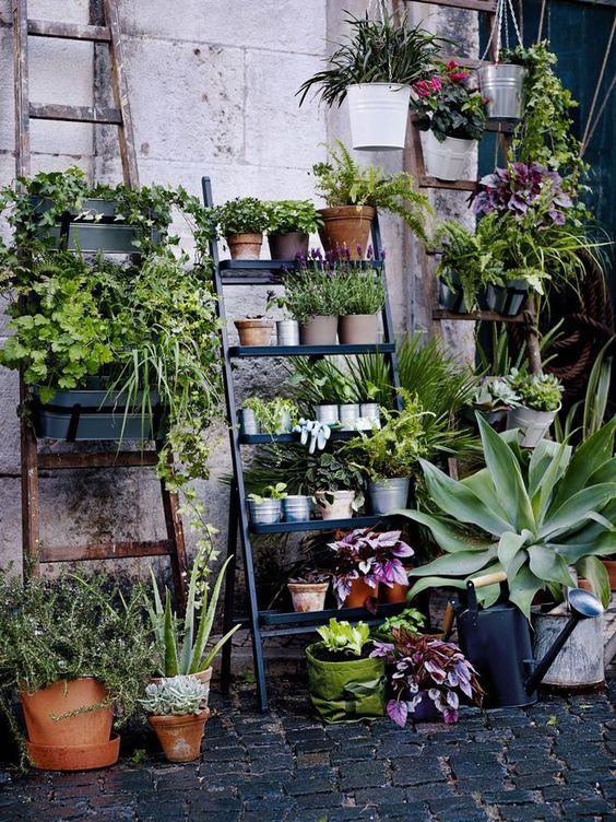 plantes terrasse et balcon