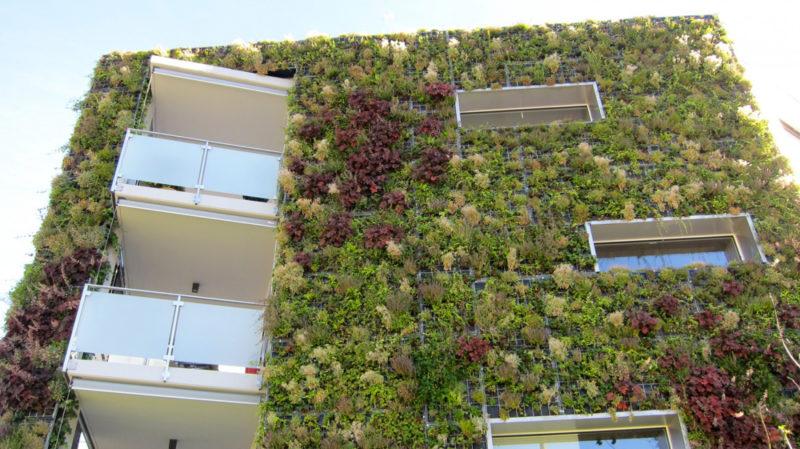 facade vegetalisee